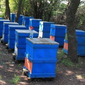 Современное пчеловодство: двухкорпусной тип конструкций ульев для пчел