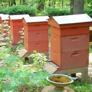 Содержание пчел в многокорпусных ульях (с видео)