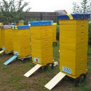 Какие пчелиные ульи самые лучшие: альпийский тип