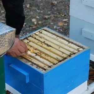 Какие пчелиные ульи самые лучшие: альпийский тип фото