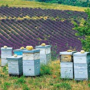 В каких ульях лучше содержать пчел начинающим пасечникам? фото