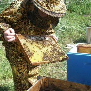 Инструкция по многокорпусному содержанию пчелиных семей (с видео)