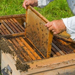 Инструкция по многокорпусному содержанию пчелиных семей (с видео) фото