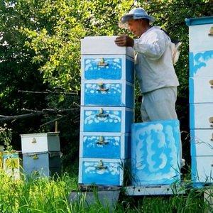 Технология содержания пчел в двухкорпусных ульях (с видео) фото