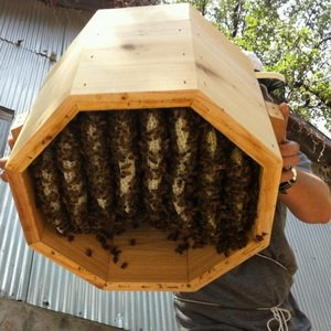 Пчеловождение: содержание пчел в 12-рамочных ульях