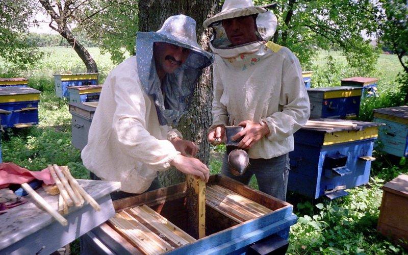 Новейшие методы пчеловодства: основные группы