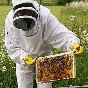Новейшие методы пчеловодства: основные группы фото