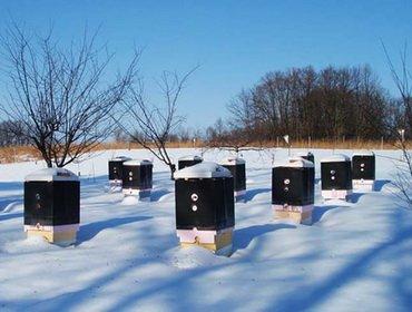Подготовка пчел к зиме или условия успешной зимовки