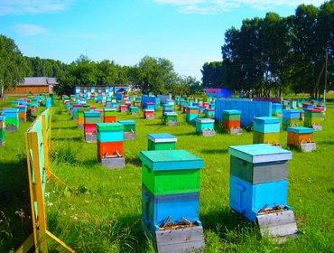 Азы пчеловодства: какие рамки должны быть в улье