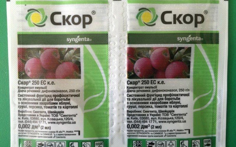 Средства защиты винограда от болезней и вредителей: чем опрыскивать лозу