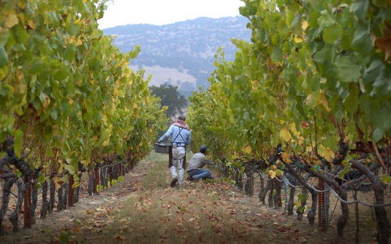 Какие органические удобрения нужно вносить под виноград