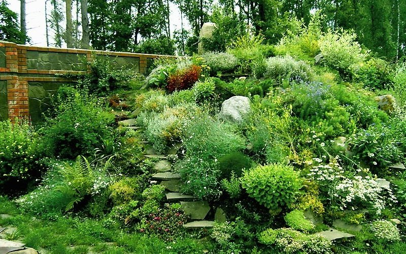 Хвойные растения и кустарники для альпийской горки: фото и названия фото
