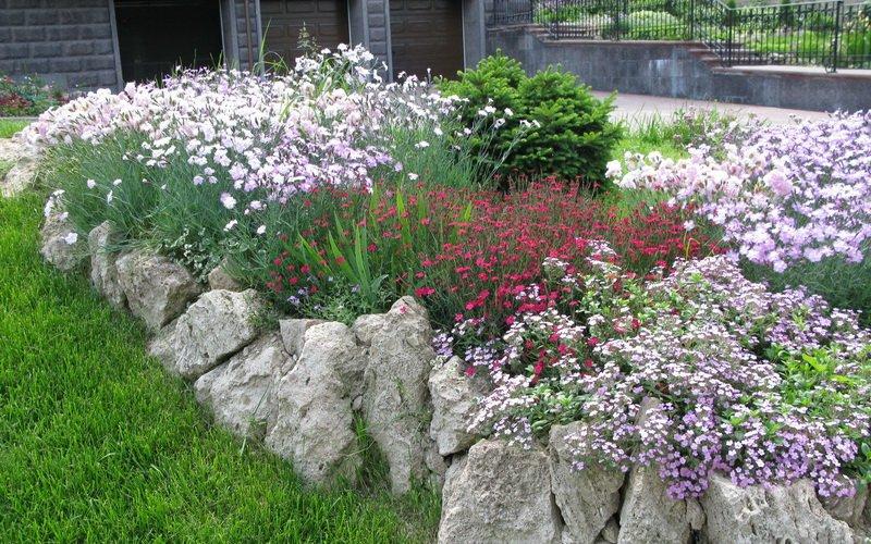 Почвопокровные растения-многолетники для каменистого сада: фото и названия