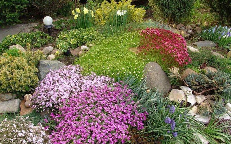 Какие ещё почвопокровные декоративные растения подойдут для рокария