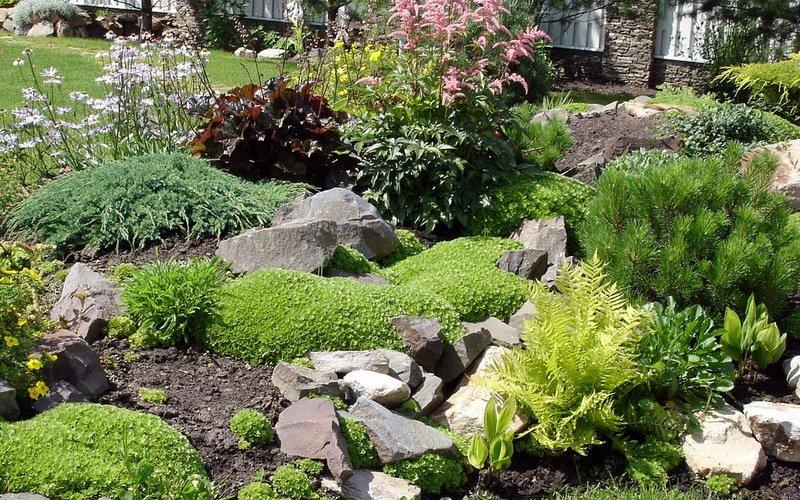 Какие ещё почвопокровные декоративные растения подойдут для рокария фото