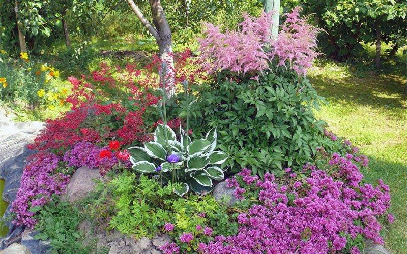 Какие почвопокровные растения наиболее неприхотливы?