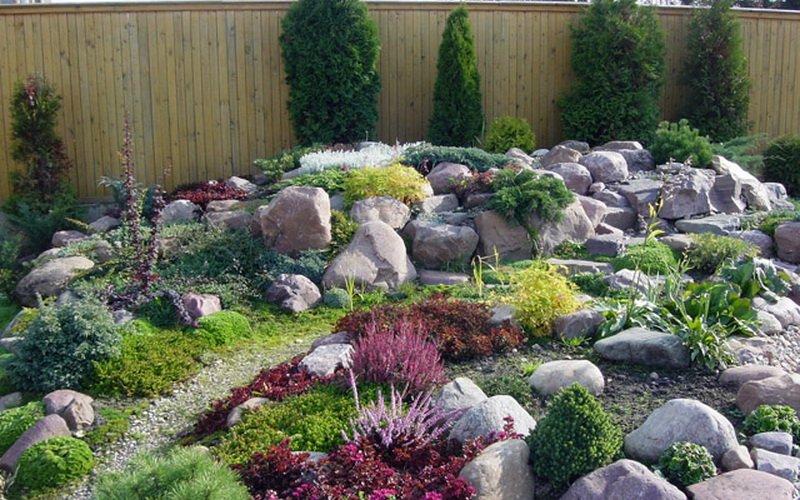 Какие почвопокровные растения наиболее неприхотливы? фото