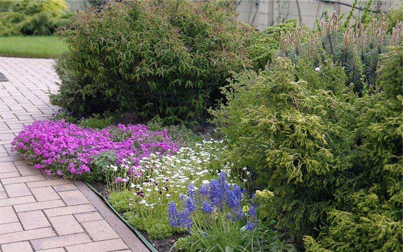 Лучшие цветы-многолетники для рокариев: фото и названия растений