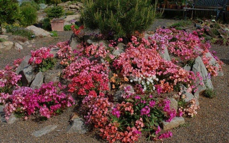 Какие горные цветы подходят для альпийской горки?