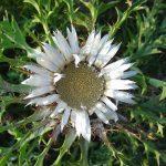 Что посадить на альпийской горке общие рекомендации и выбор растений видео
