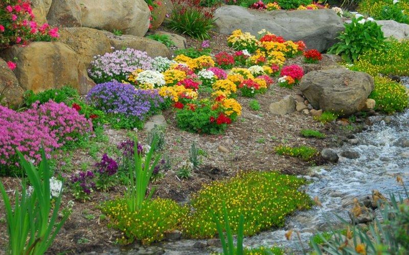 Цветы-многолетники для альпинария: фото и названия фото