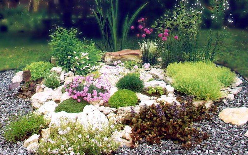 Какие цветы-эфемероиды можно сажать на альпийской горке