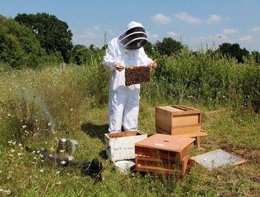 Правильное расширение пчелиных гнезд в ульях