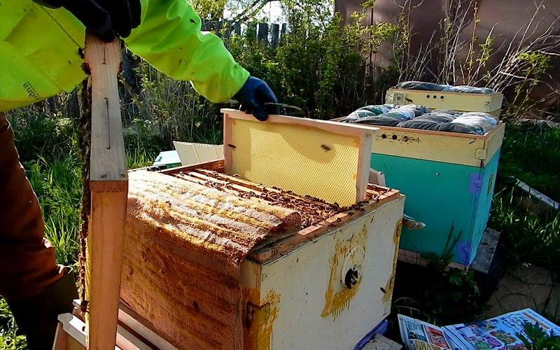 Пчеловодство в России: расширение гнезда