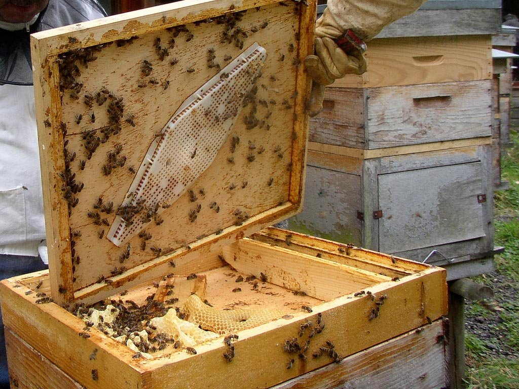 Параметры устройства пчелиного улья