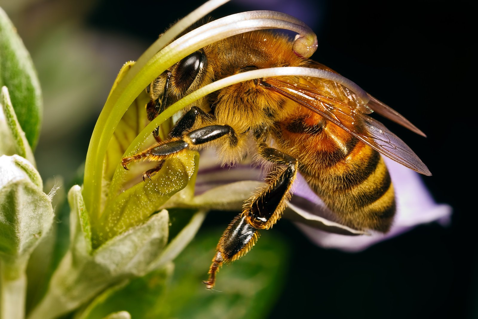 Картинка с пчелами, для