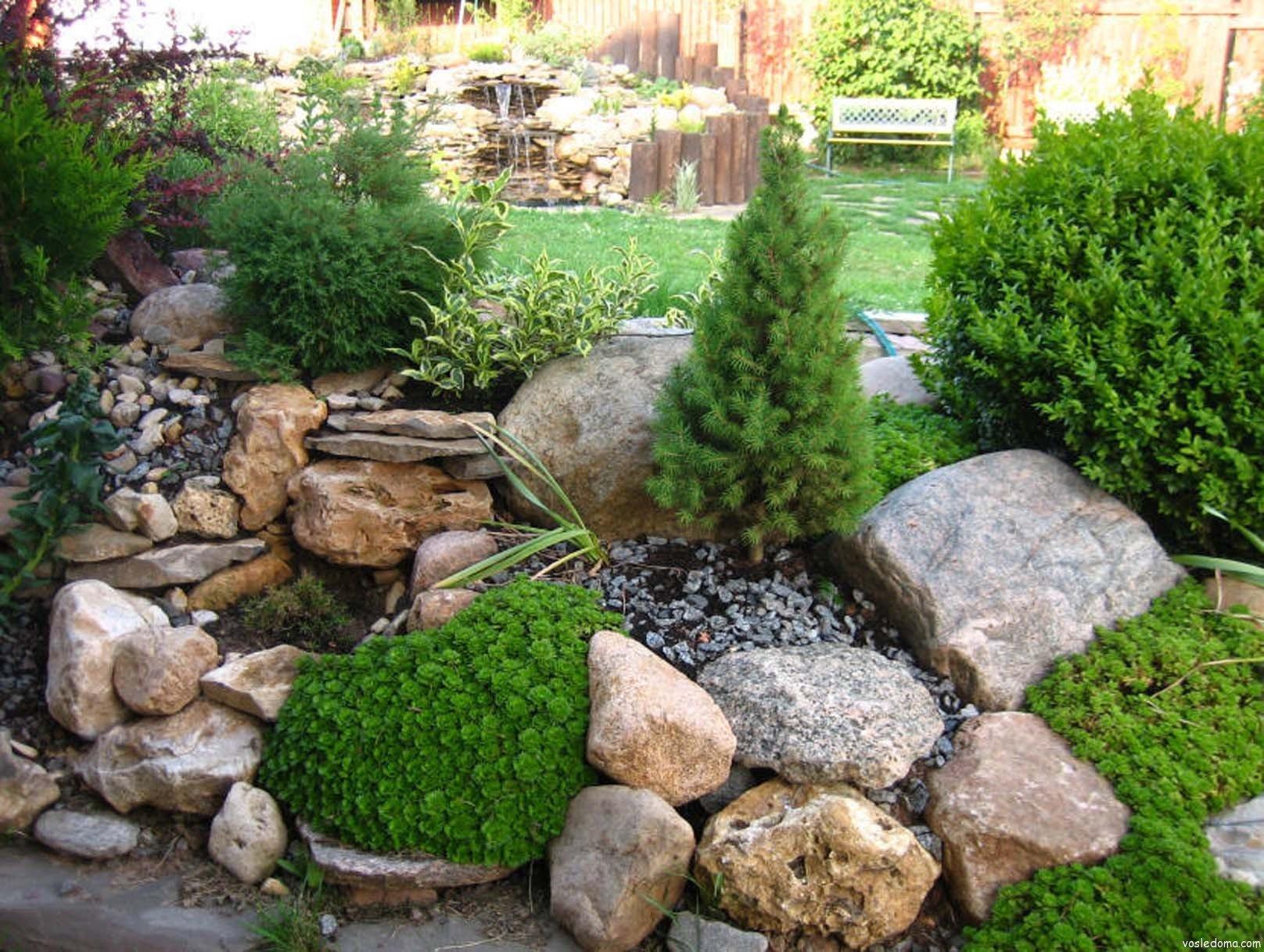 Хвойные растения и кустарники для рокария и альпийской горки