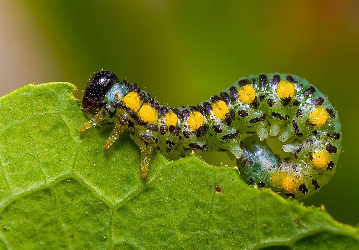 Болезни и вредители овощных культур: виды и способы защиты