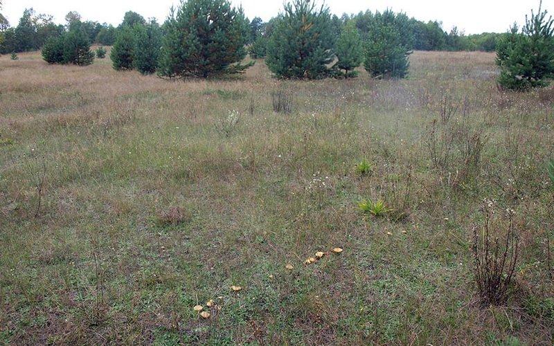 Как выглядят маслята: фото и описание грибов фото