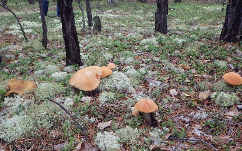 Где растут белые грибы: в каким лесах можно найти боровики