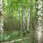 Вредители и болезни деревьев: фото, видео обработки деревьев весной, осенью и летом