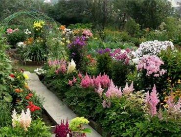 Болезни и вредители цветов в саду: фото и средства защиты