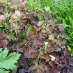 Борьба с вредителями растений: меры, способы, химические, народные средства