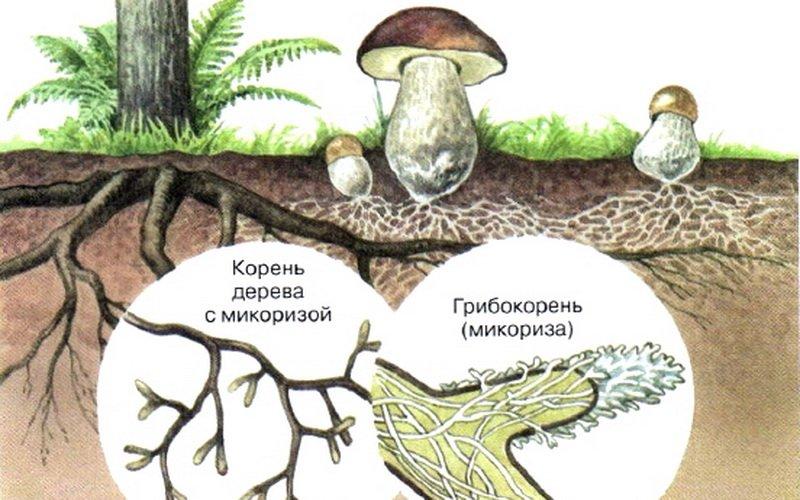 Симбиоз грибов с насекомыми
