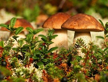Царство грибов: основные характеристики и особенности