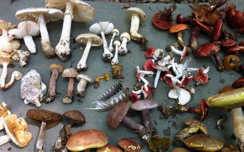 Особенности грибов и строение их клеток