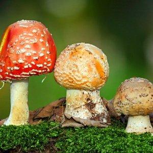 Царство грибов: мифы и реальность