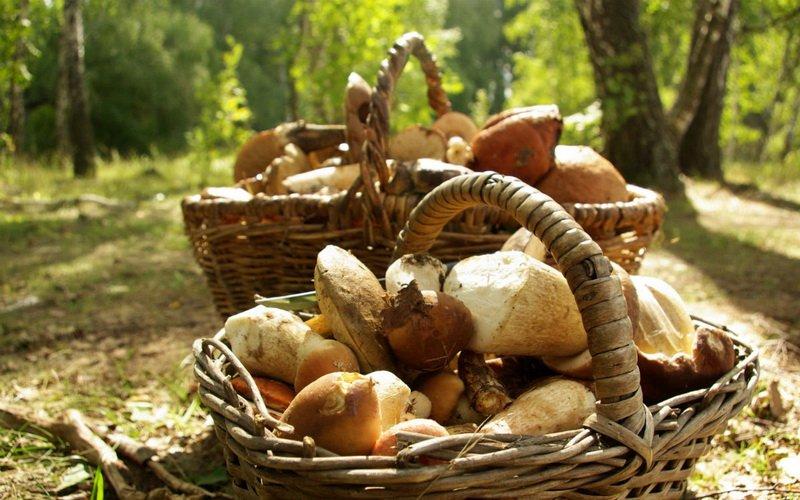 Правила сбора и покупки грибов