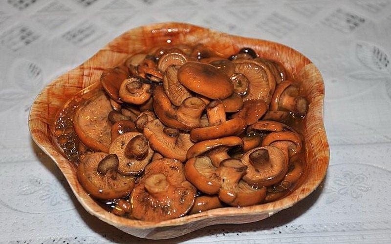 Способы заготовки грибов рыжиков