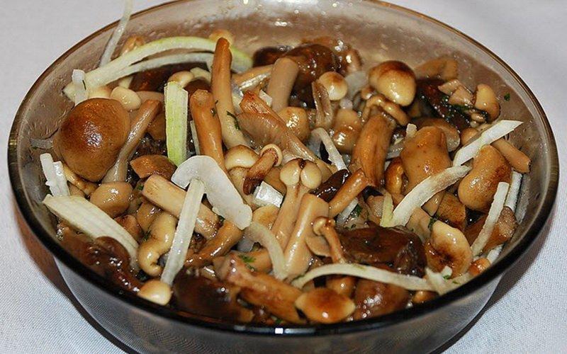 Заготовка грибов способом соления: рецепты с видео