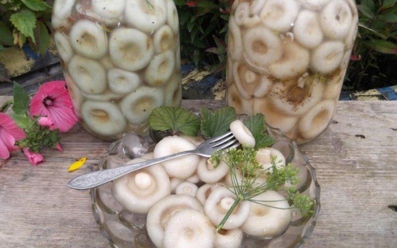 Заготовка грибов способом соления: рецепты с видео фото