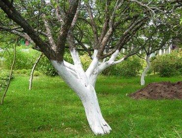 Вредители яблонь и их лечение (с фото)
