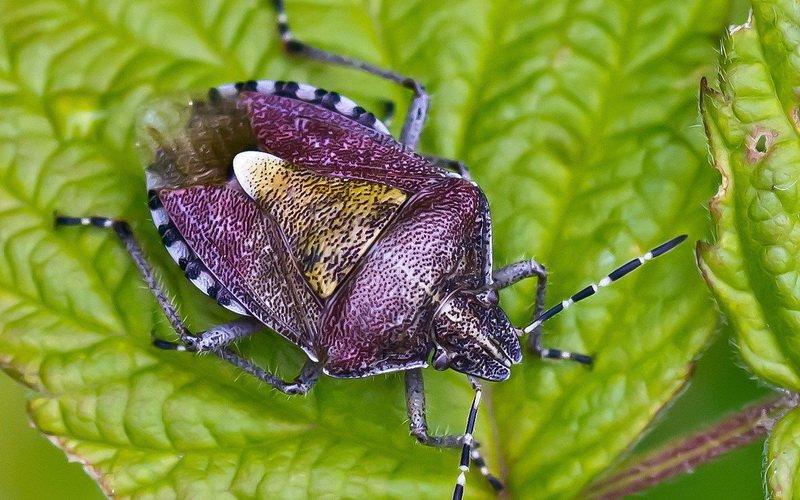 Вредители на груше весной (с фото) фото