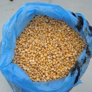 Чем лучше кормить уток для быстрого роста: зерновые корма фото