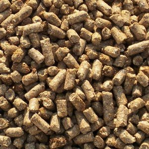 Каким кормом кормить взрослых домашних уток: отруби и отходы