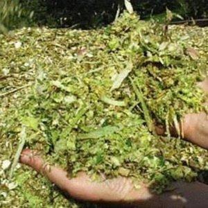 Какой травой и хвоей можно кормить уток?